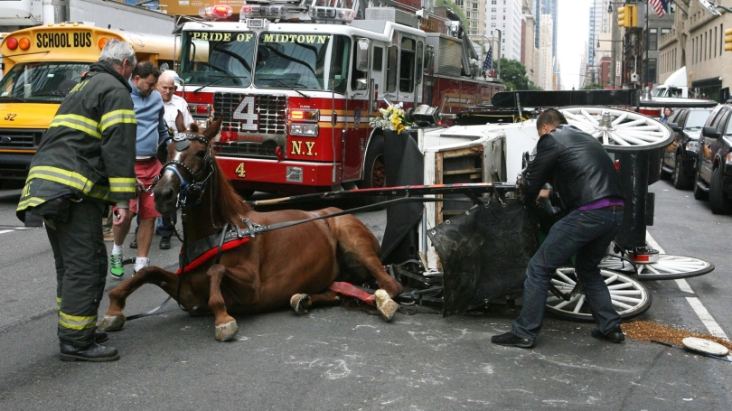 carriage-horse-accident-9-26-13 (1)
