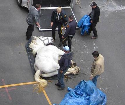 konj nesreca