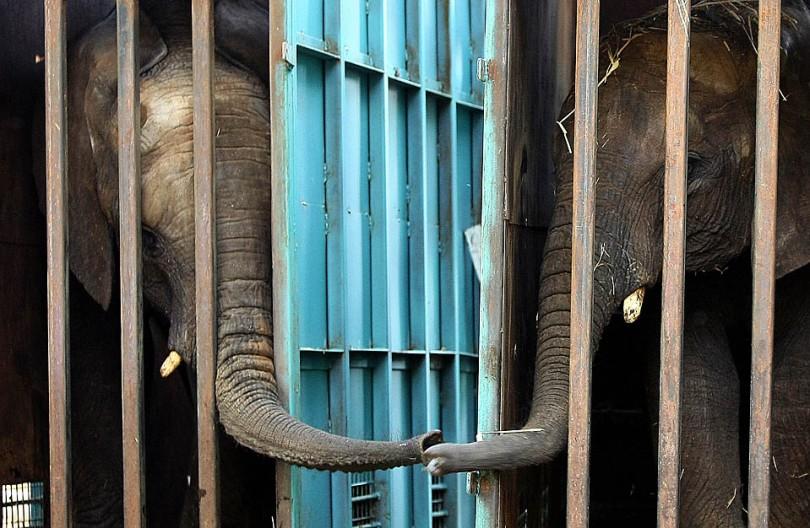 Slonovi u zoo vrtu