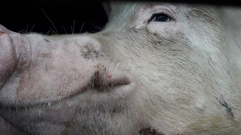 Animal Save Movement